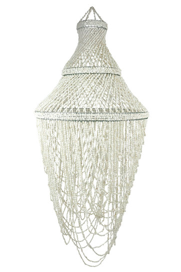 Lamp Shells Kerang White