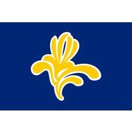 Vlag Brussels Capital Region flag up to 2015