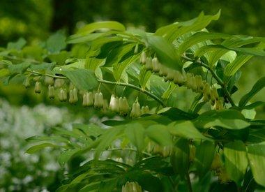 Schattenpflanzen