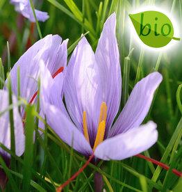 Krokus (Safran)  Crocus sativus, BIO