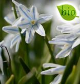 Mischung  Mischung: knallgelb & gestreiftes Blau – BIO