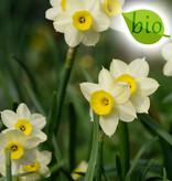 Mischung  Mischung: reinweiss & sanft-gelb - BIO