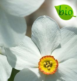 Narzisse (Dichter)  Narcissus poeticus var. recurvus, BIO