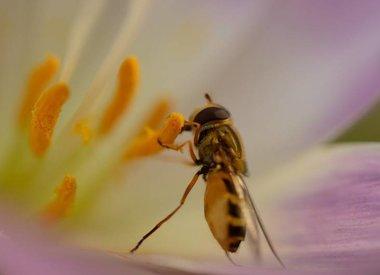 BIO-Blumenzwiebeln