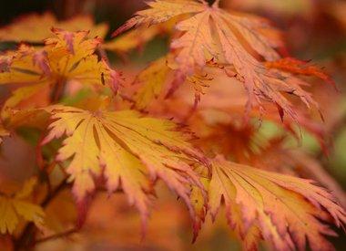 Alle Herbstblüher