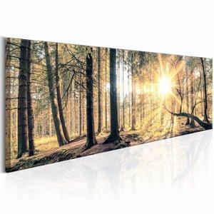 Canvas Schilderij - Herfst kleuren 150X50 , oranje bruin , 1 luik , boom