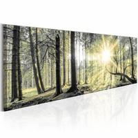 Schilderij - Ochtend bos 150X50 , beige bruin , 1 luik