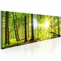 Schilderij - Zon door de Bomen - Panorama, groen, premium print op canvas, 1luik