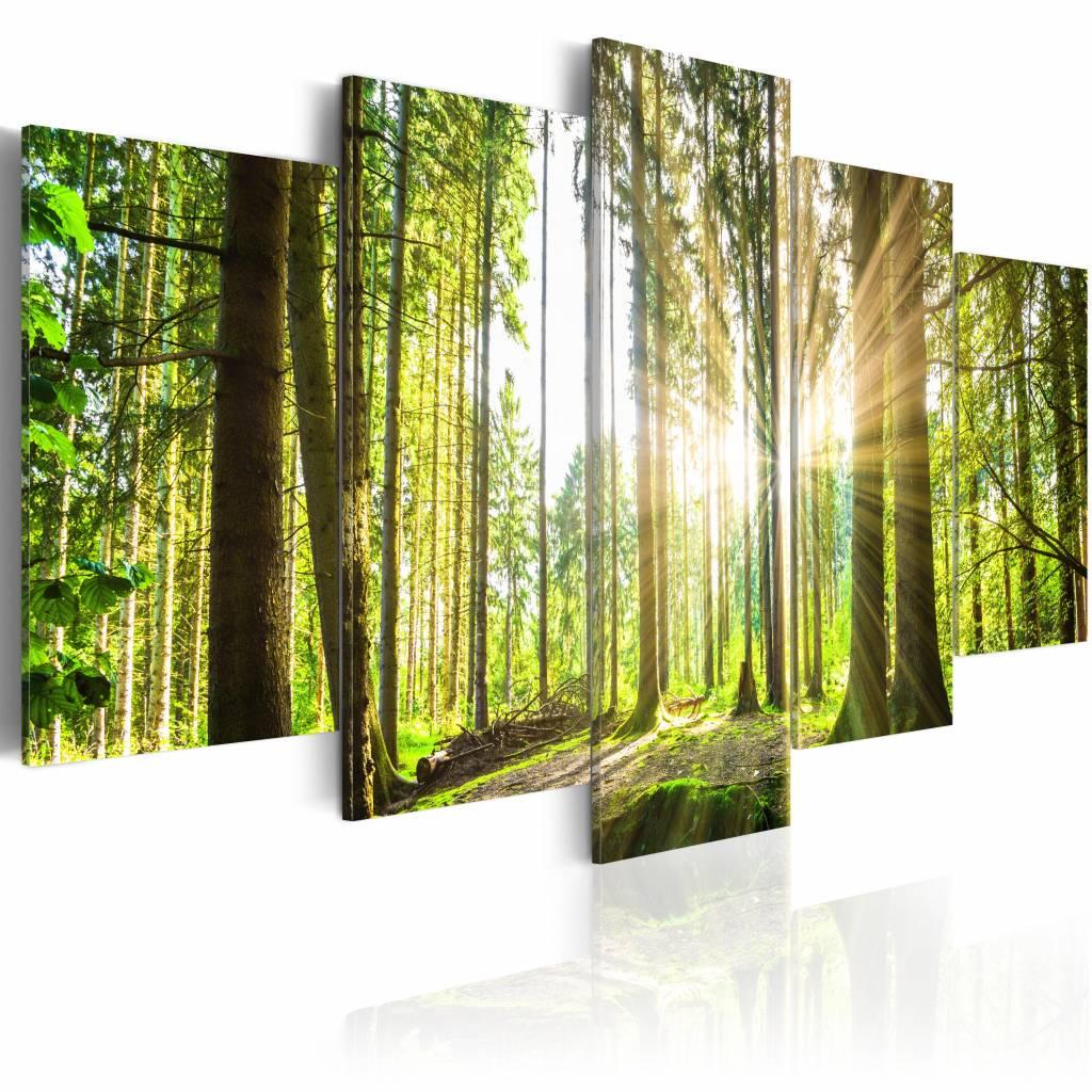Schilderij - Koninklijk Bos , Groen/Bruin, 5luik , premium print op canvas