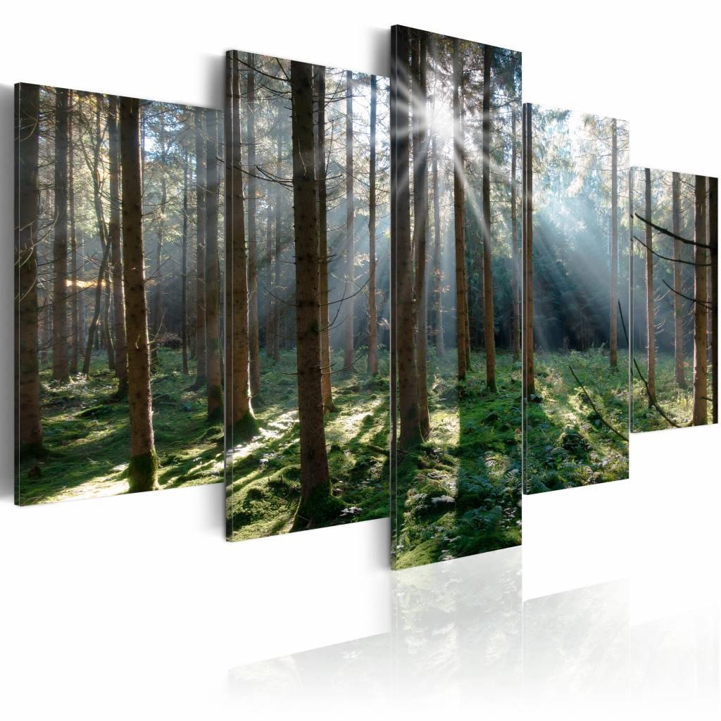 Schilderij - Sprookjesbos, Groen/Bruin, 5luik