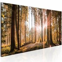 Schilderij - Kleine natuurwonderen 150X50 , bomen , groen bruin , 1 luik