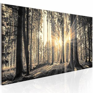 Schilderij - Tussen de bomen door 150X50cm , zwart wit , 1 luik