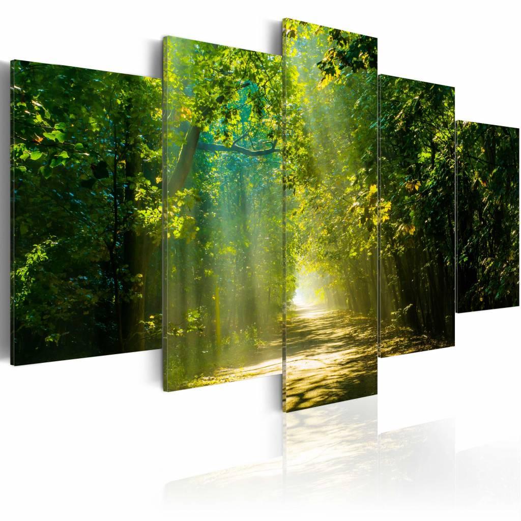 Schilderij - Zonnig Bospad ,Groen, 5luik , premium print op canvas