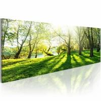 Schilderij - Zonnestraal in het Bos, Groen, 1luik , premium print op canvas