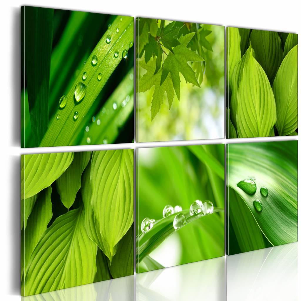 Schilderij - Groene Bladeren, Groen, 6luik , premium print op canvas
