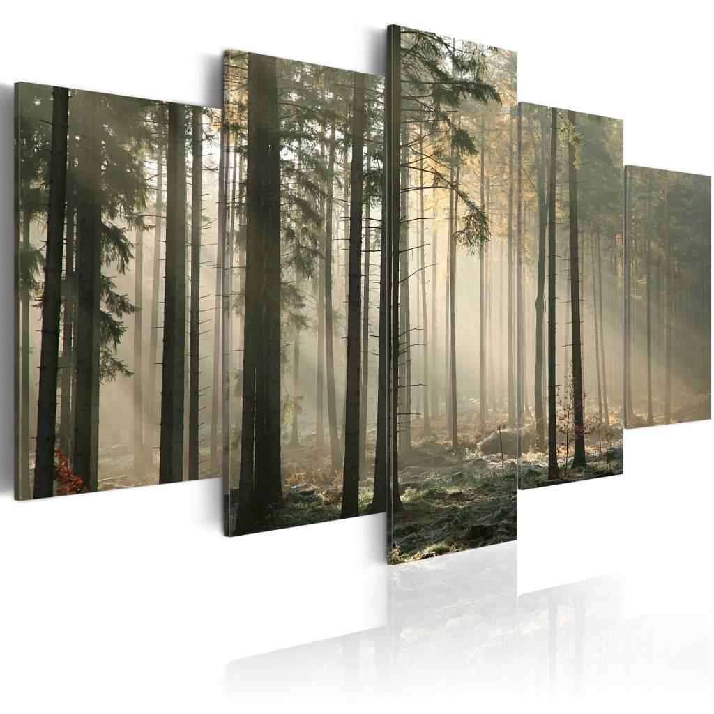 Schilderij - Licht in het Donker - Bos, 5luik , premium print op canvas