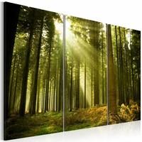 Schilderij - Bos - schoonheid van de natuur, groen, 3luik, 2 maten