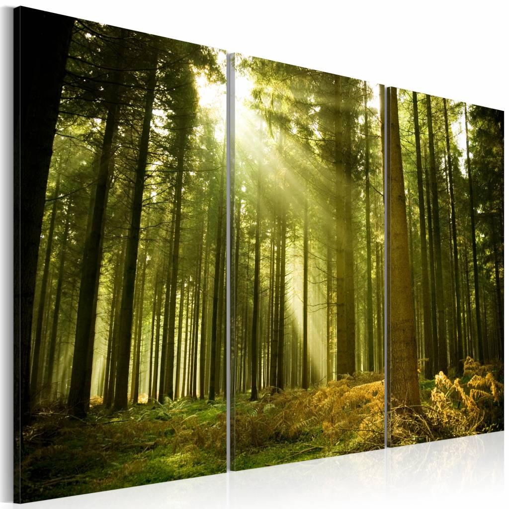 Schilderij bos schoonheid van de natuur karo art vof for Schilderij natuur