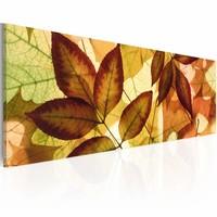 Schilderij collage - bladeren 120x40cm, 1deel, groen/bruin/rood