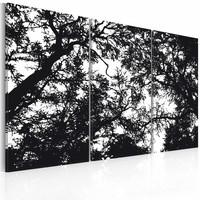 Schilderij - Dichte bossen, zwart wit , boom , 3 luik