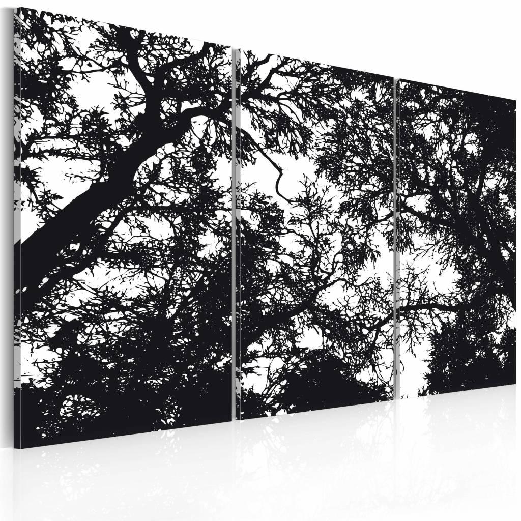 Schilderij - Dichte bossen, zwart wit , boom , 3 luik - 120x80 cm