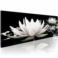 Schilderij - Waterlelie, Zwart/Wit/Groen, 3 maten, Premium print