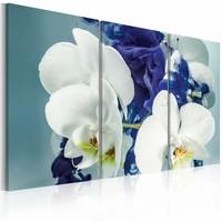 Schilderij - Hersenschim orchideeën , wit blauw , 3 luik , 2 maten