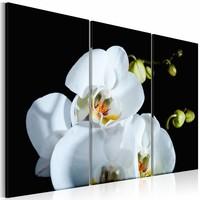 Schilderij - Orchidee in 3 delen , zwart wit , 2 maten