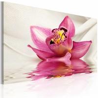 Canvas Schilderij - Ongewone Orchidee 60x40 , wit roze , 1 luik
