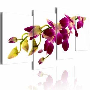 Schilderij - Gloed van de orchidee ,  wit paars , 4 luik , 80x45