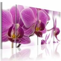 Canvas Schilderij - Geweldige Orchidee , paars wit , 4 luik , 2 maten