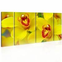 Schilderij - Orchids - intensity of yellow color