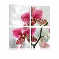 Schilderij - Orchidee in 4 delen , wit roze , 4 luik