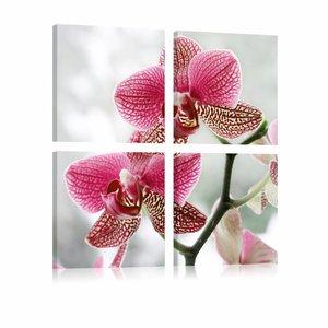Canvas Schilderij - Orchidee in 4 delen , wit roze , 4 luik , 2 maten