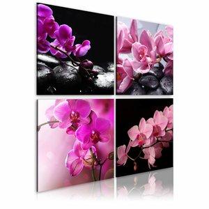 Schilderij - Orchideeën mooier dan ooit , zwart roze , 4 luik , 2 maten