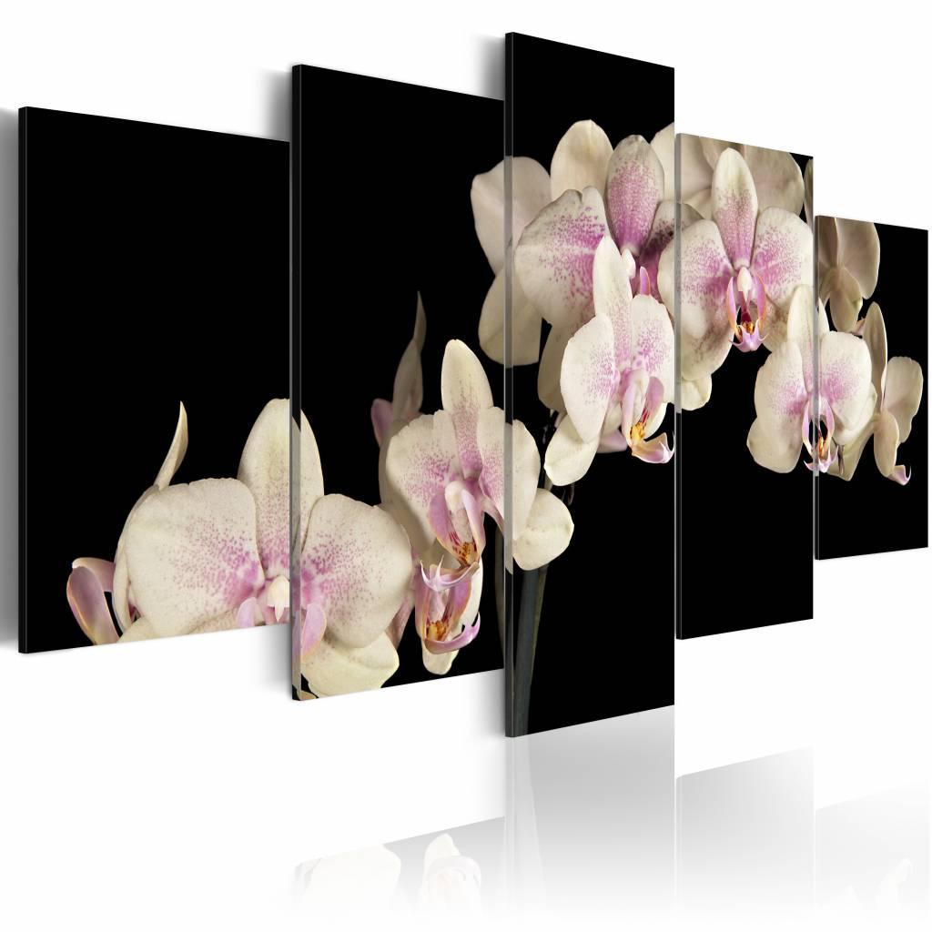 Schilderij - Orchidee�n op een contrasterende achtergrond , 5 luik