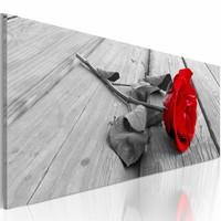 Schilderij - Karmijn roos , grijs , 1 luik , 2 maten
