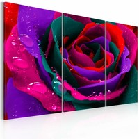 Schilderij - Regenboog kleurige roos , bloem , 3 luik