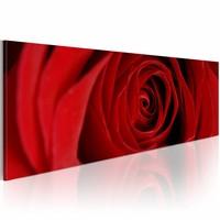 Schilderij - Roos , rood , bloem