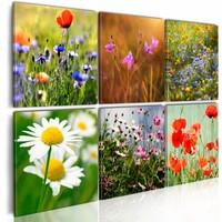 Schilderij - Duizenden weidekleuren - Collage , multi kleur , 6 luik , 2 maten