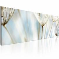 Schilderij - Paardenbloem  120x40cm , wit