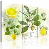Schilderij - Fruit: lemon, Groen/Geel, 2 Maten, 3luik