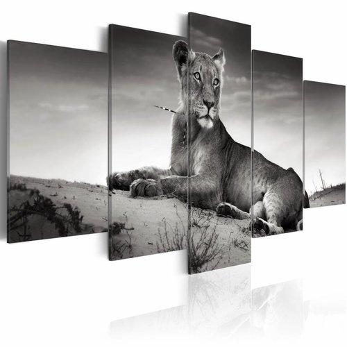 Schilderij Leeuwin In De Woestijn Zwart Wit Wanddecoratie Print Karo Art Vof