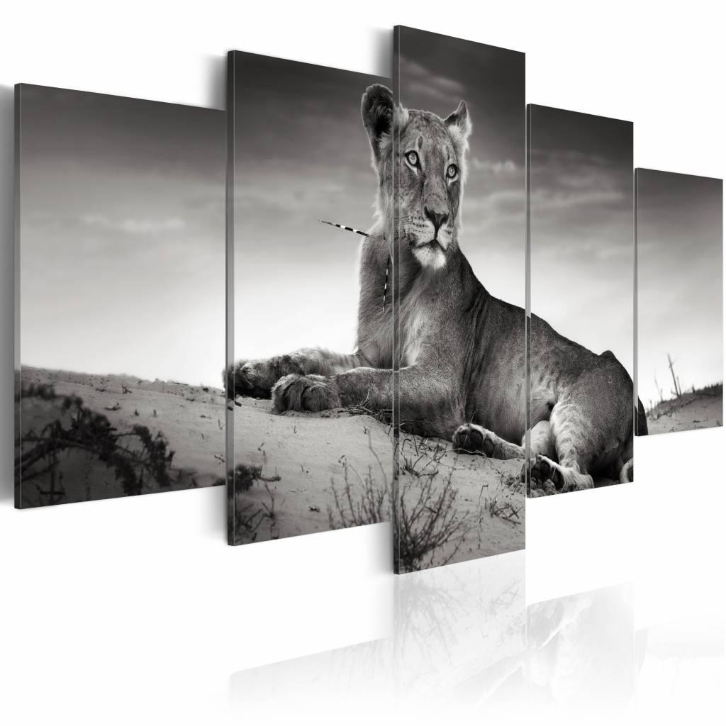 Schilderij - Leeuwin in de woestijn, 5 luik, 2 maten, zwart/wit