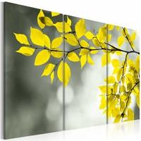 Schilderij - Gouden lente , geel , boom , 3 luik