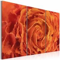 Schilderij - Roos in oranje  , 3 luik , 2 maten