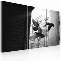 Schilderij - Duiven , zwart wit , 3 luik