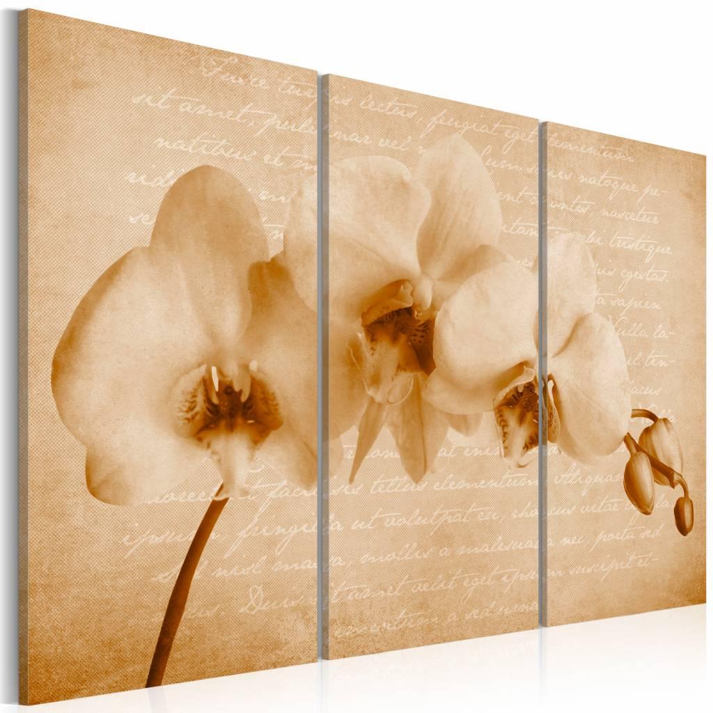 Schilderij - orchidee (vintage) , beige , 3 luik