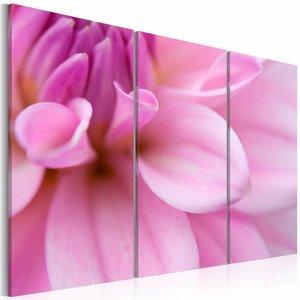 Schilderij - Roze dahlia , bloem , 3 luik , 2 maten