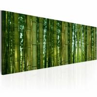 Schilderij - Bamboe in de zon ,  groen , 1 luik , 120x40